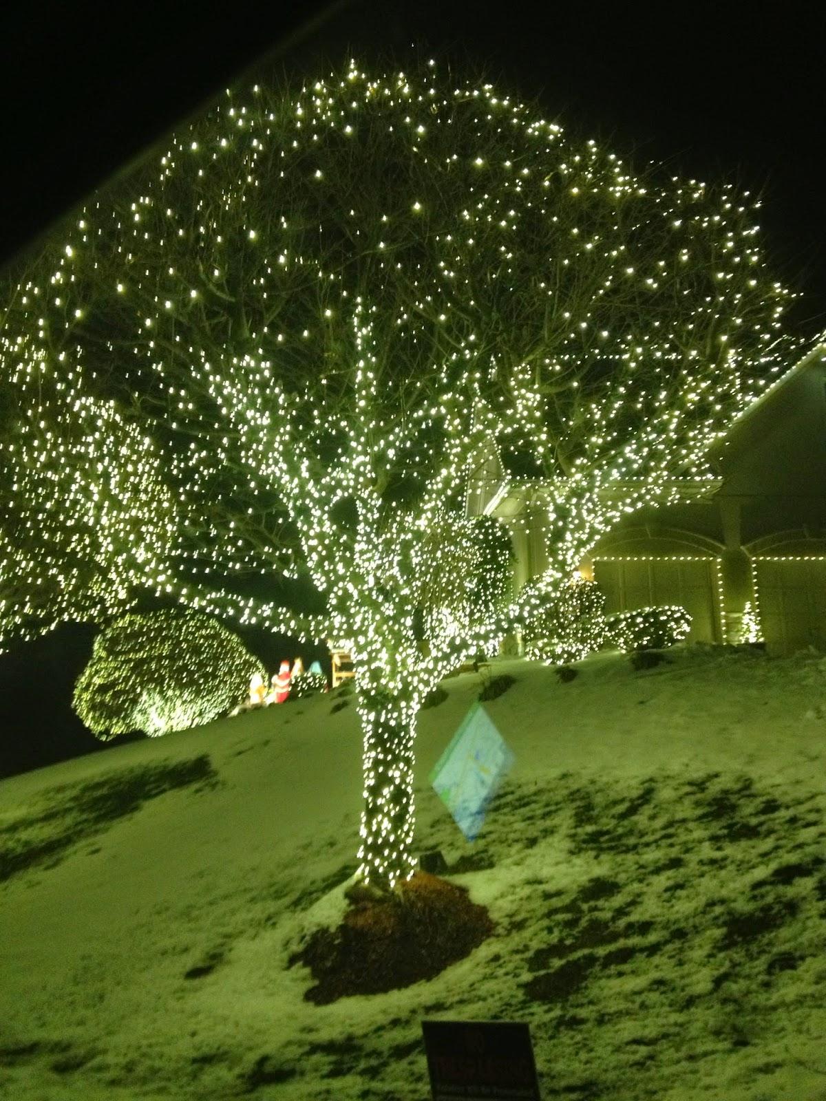 tour-of-christmas-lights