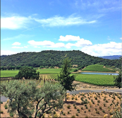shafer-vineyard-napa-view