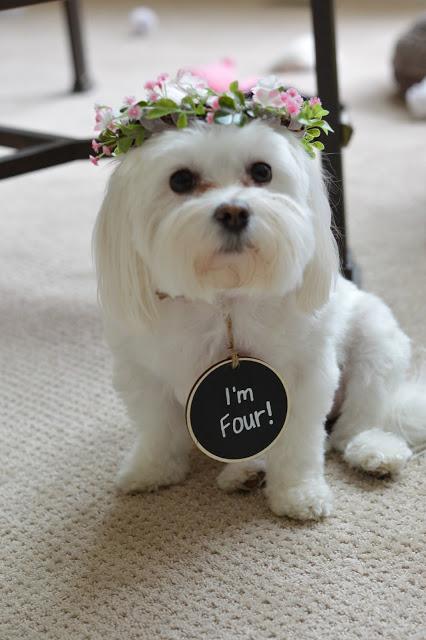 dog-birthday-party
