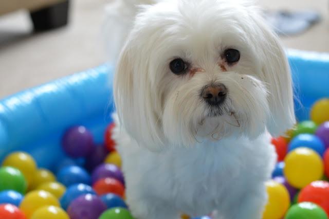 dog-birthday-party-ideas