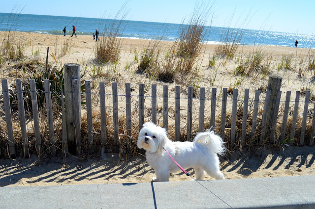 dogs-at-rehoboth-beach