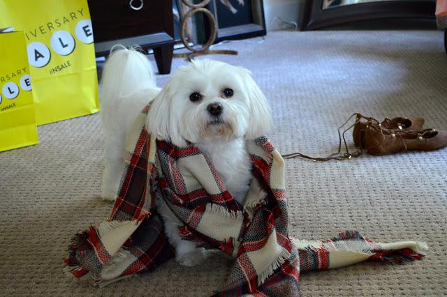 dog-wearing-scarf