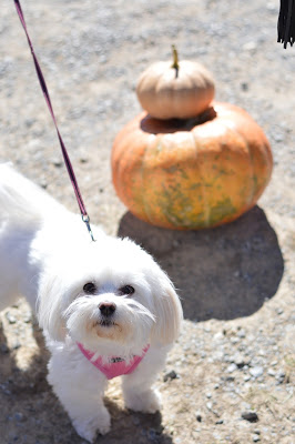 dog-friendly-pumpkin-patch-virginia