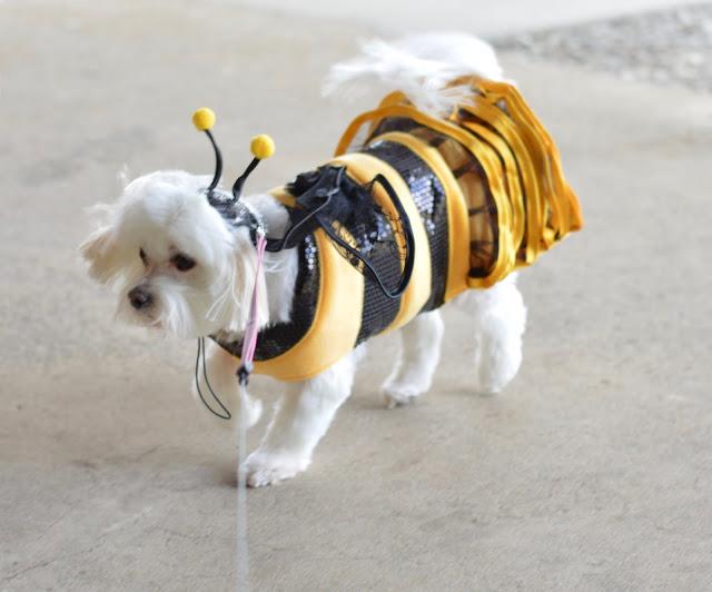 dog-bumblebee-halloween-costume