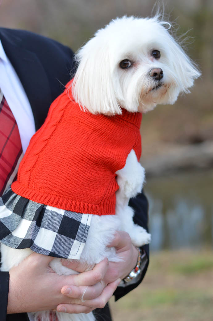 cute christmas dress for dogs
