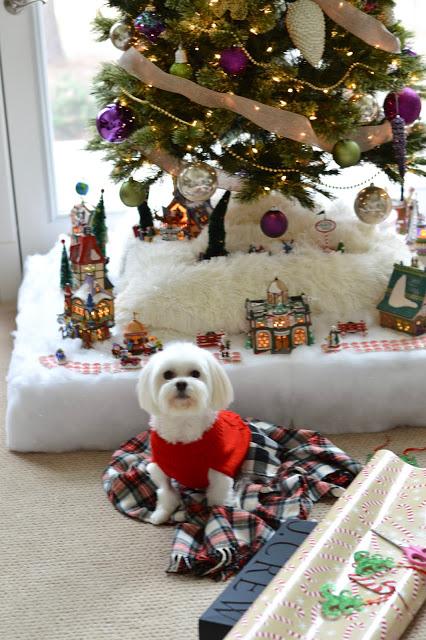 cute-morkie-christmas