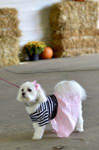 dog halloween costume poodle skirt