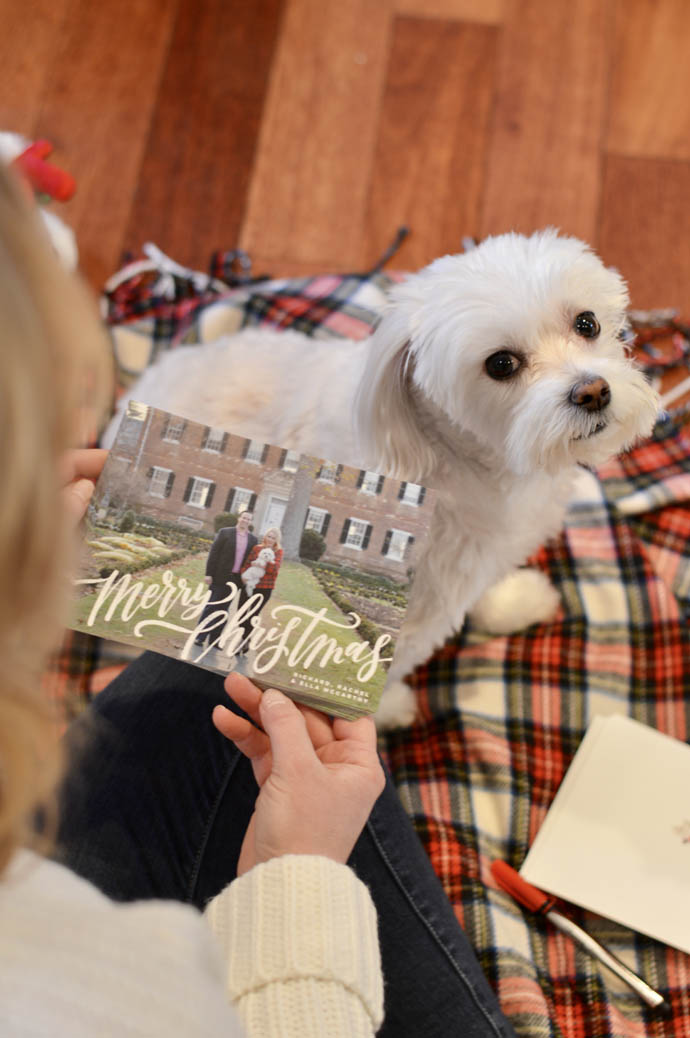 minted christmas cards review